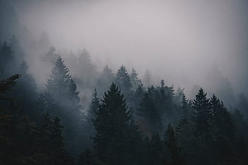 fog-cold-trees-pines-royalty-free-thumbnail.jpg